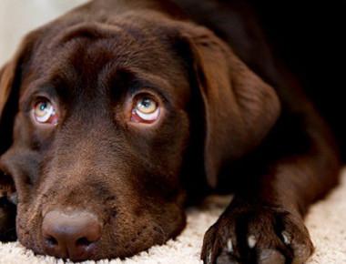 morte-cane-petpassion-2-657x360