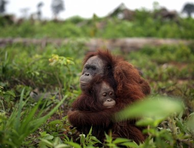 Why you should not use palm oil